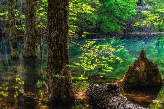 лес, деревья, водоём, пейзаж
