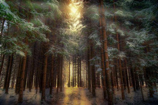 Ёлки-палки-лес густой (2К, 30 шт)