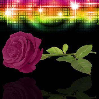 нежные розы 26
