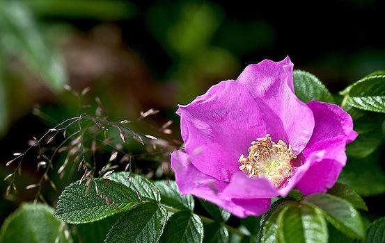 нежные розы 22