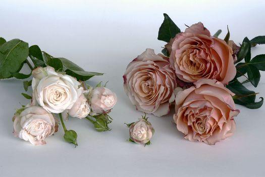 нежные розы 6