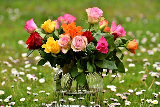 нежные розы 5