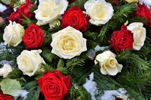 нежные розы 2