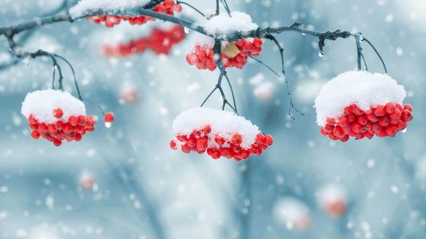 Зимние плоды (2К-4К, 30 шт)