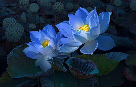 Лотос - цветок самый древний на земле