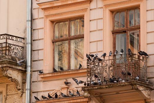 Голубь – птица из семейства голубиных