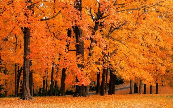 природа, фото, обои, осенние обои, осень, деревья, жёлтый, леса, парки, листья, листопад