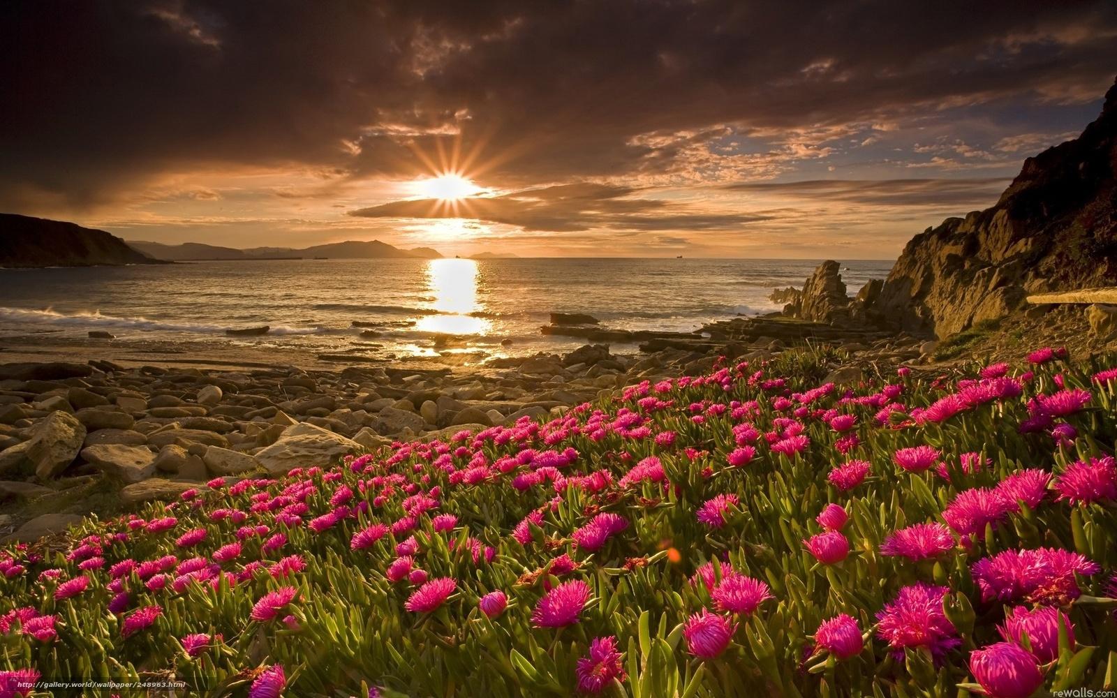 Фото солнце небо цветы