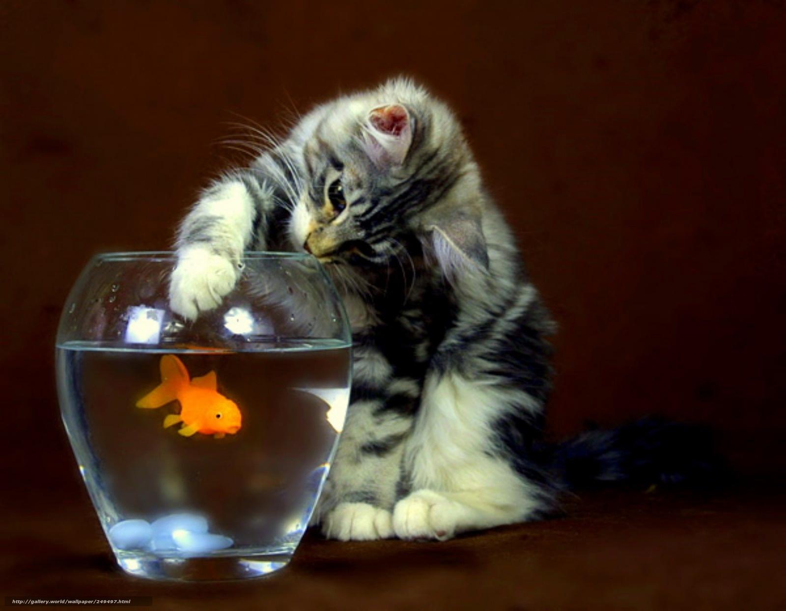 Котенок ловит рыбу фото