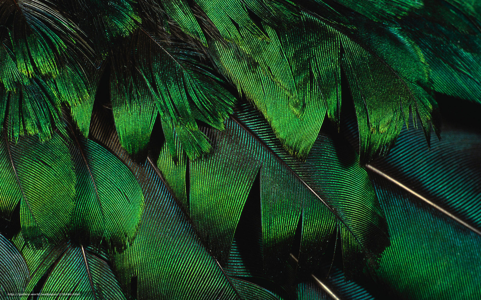 Feathers Wallpaper Stock Images RoyaltyFree Images