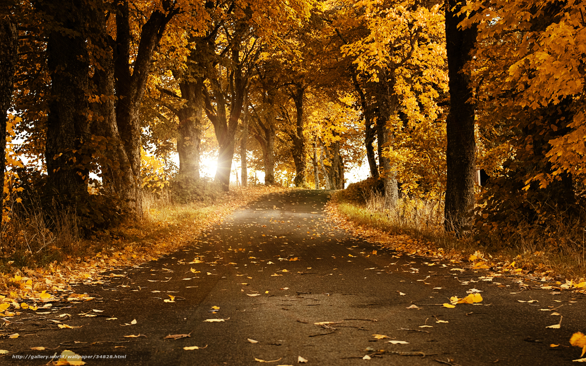 autumn, leaves, road, швеция, Trees