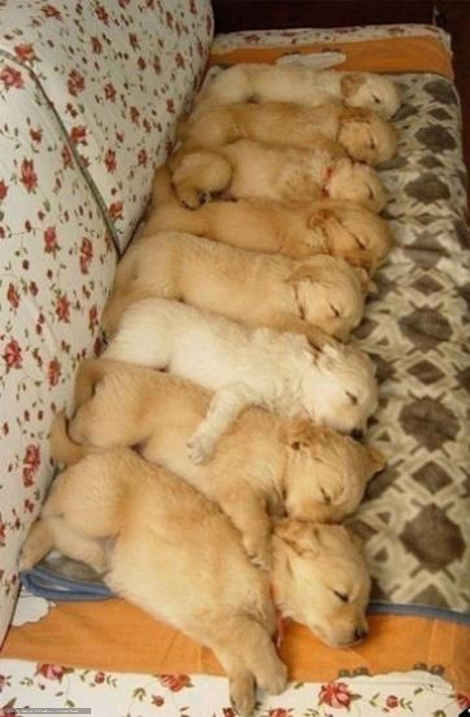 Как усыпить щенков самому