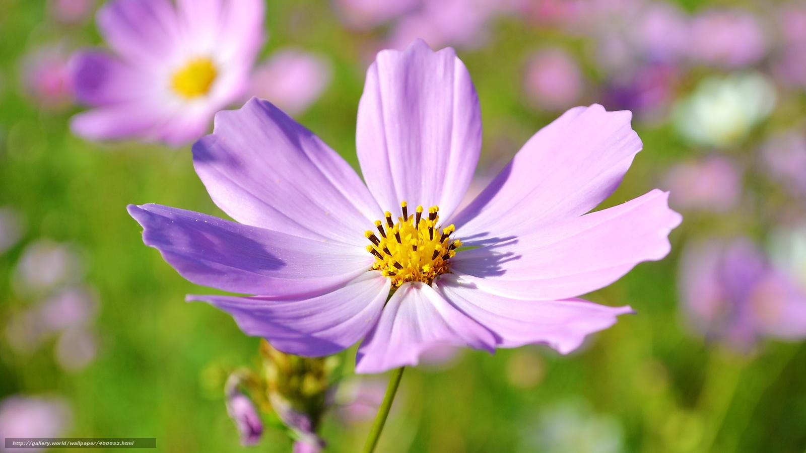Макро красивых цветов