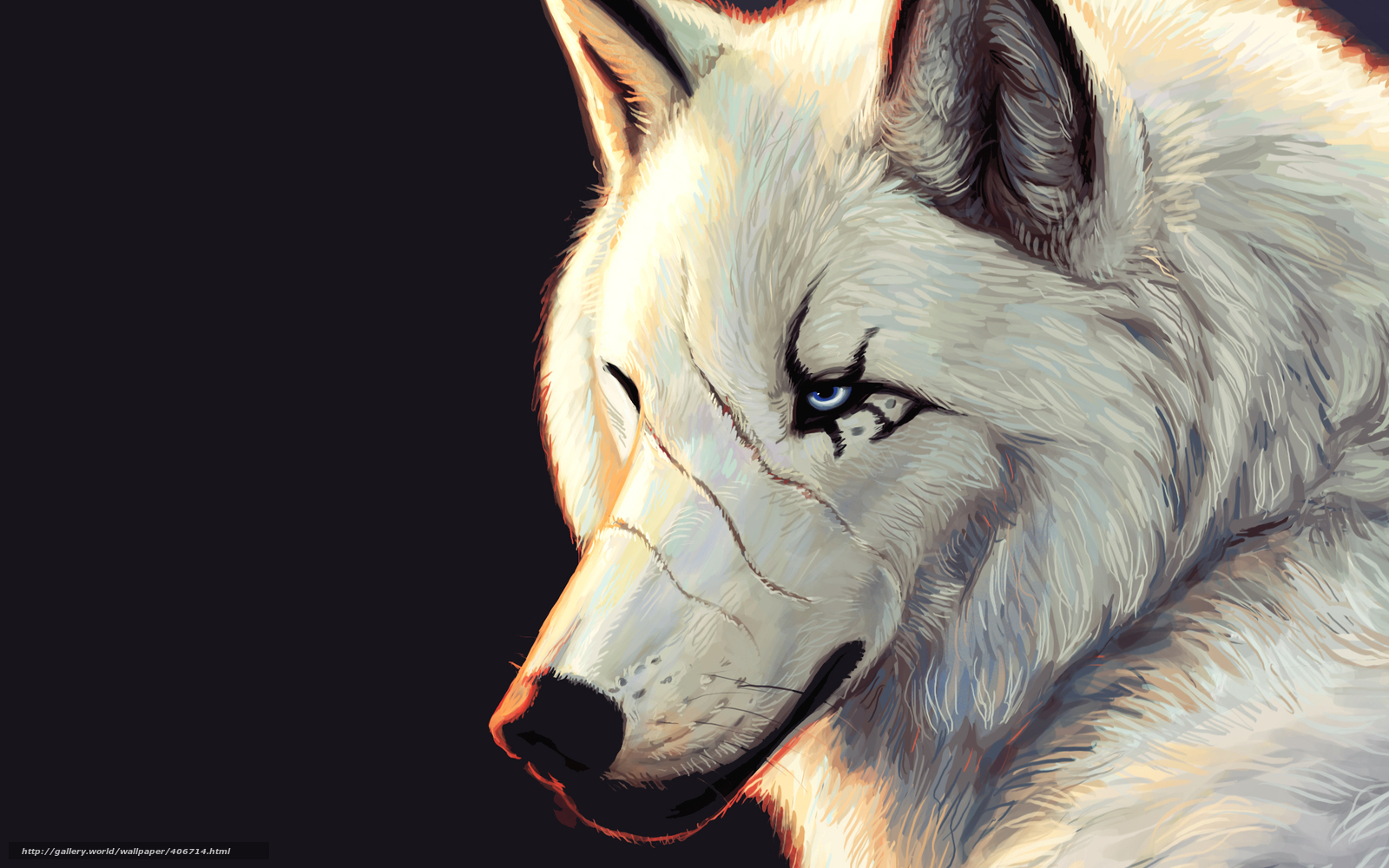 wolf, white, scars, blue eyes, Black Background