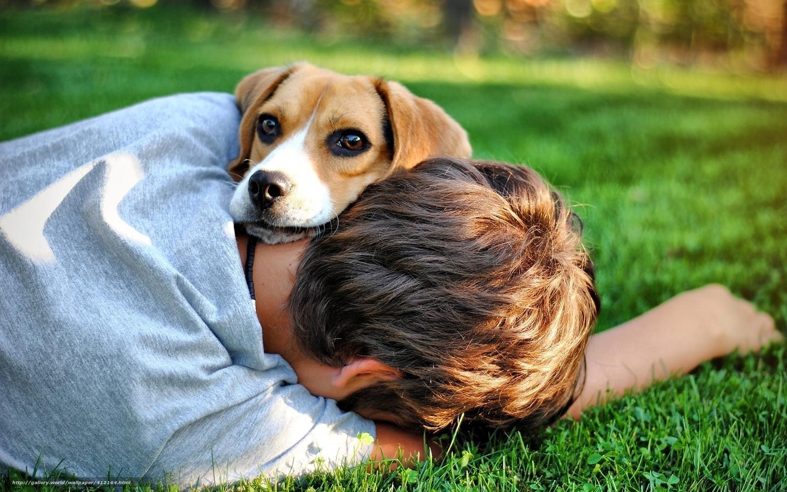 Friends, dog, Boy