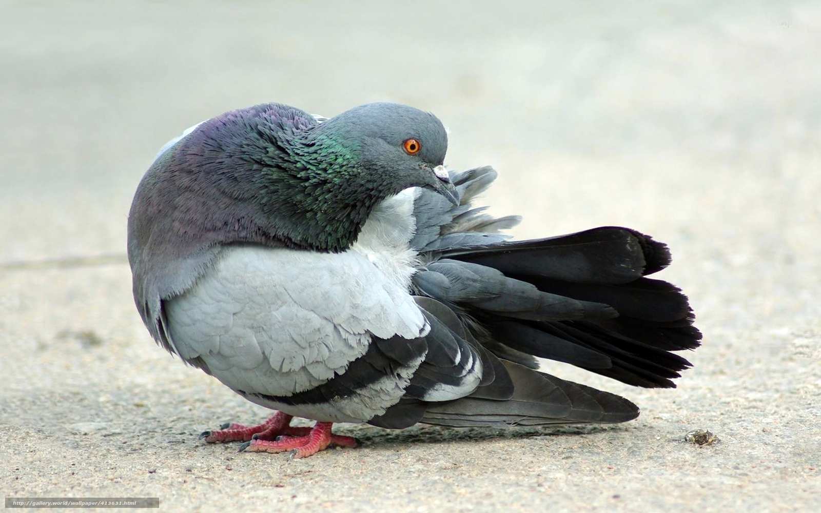 pigeon feathers A&p and other stories study guide contains a biography of john updike, literature essays, quiz questions, major themes, characters, and a full summary and analysis.
