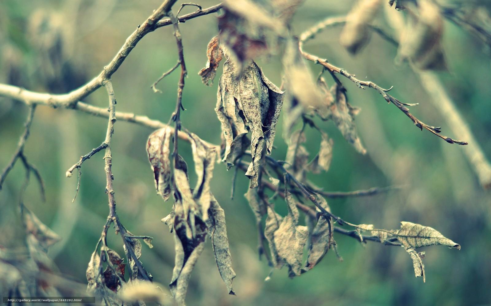 Сонник сухие ветки приснилось, к чему снится во сне сухие ветки?