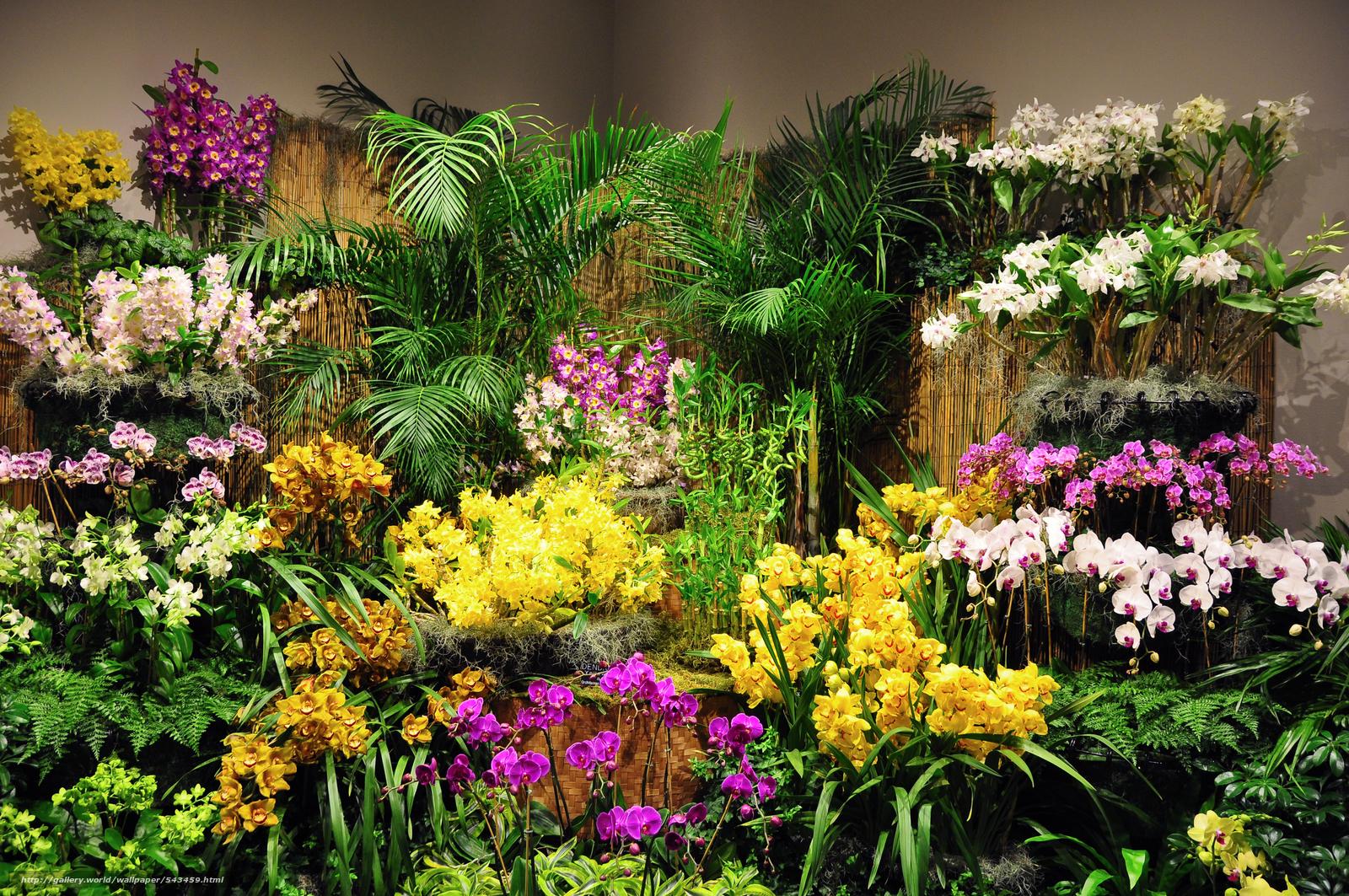 Фото оранжерея цветов
