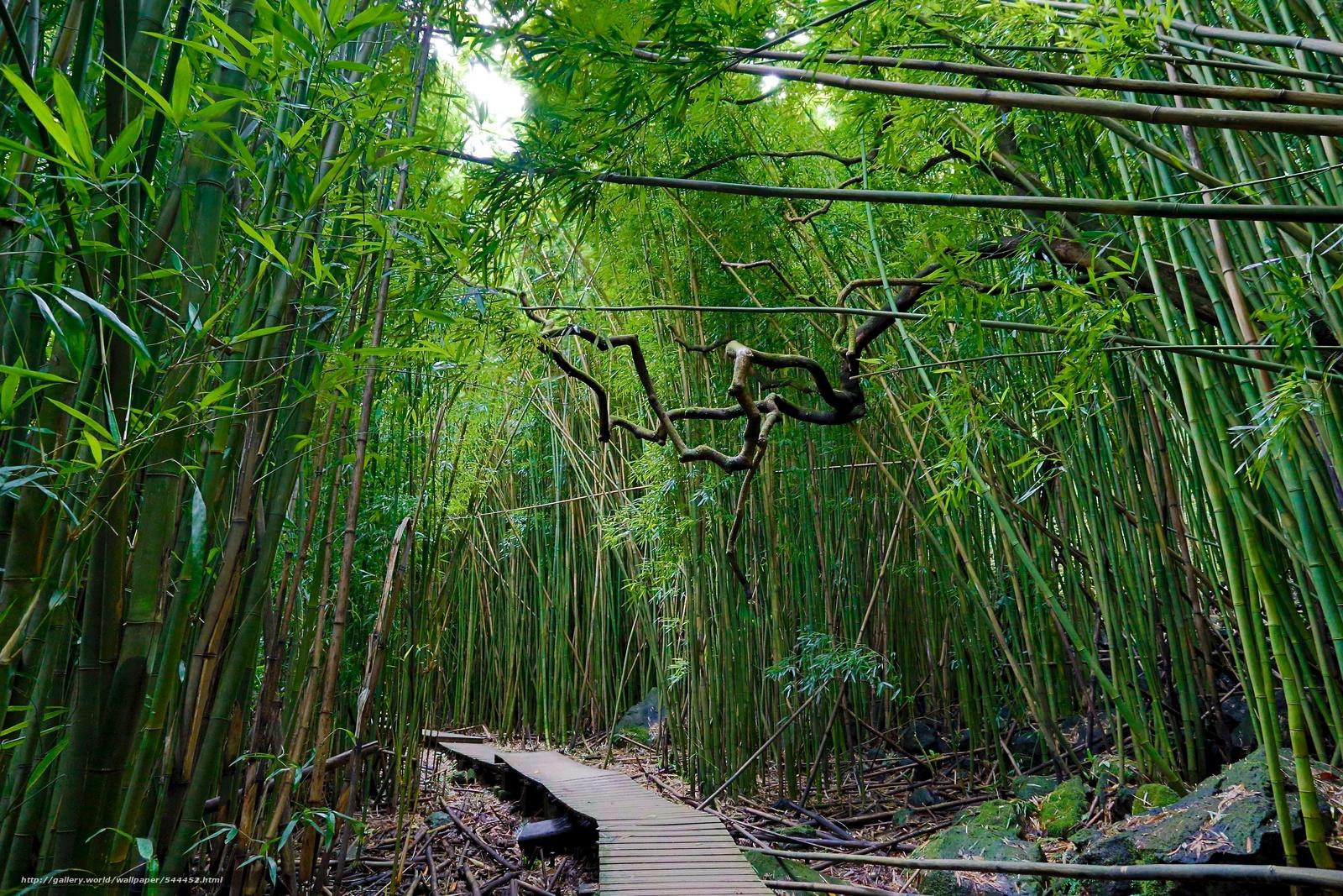 kazino-bambuk-foto