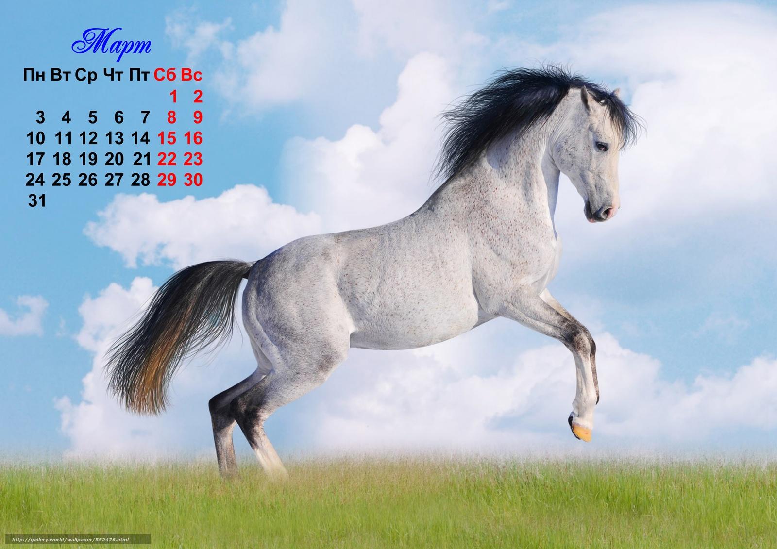 год лошади обои для рабочего стола № 528448 без смс