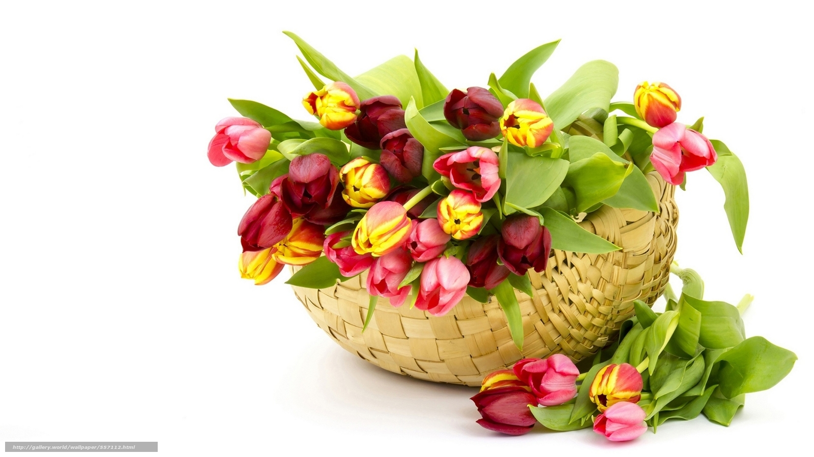 nature, flowers, Flower, basket, Tulips