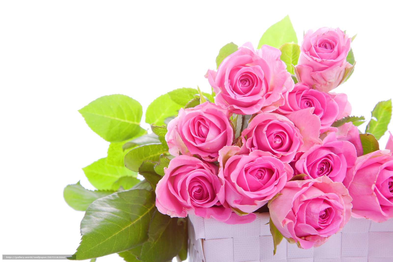 nature, flowers, Flower, basket, Pink, roses