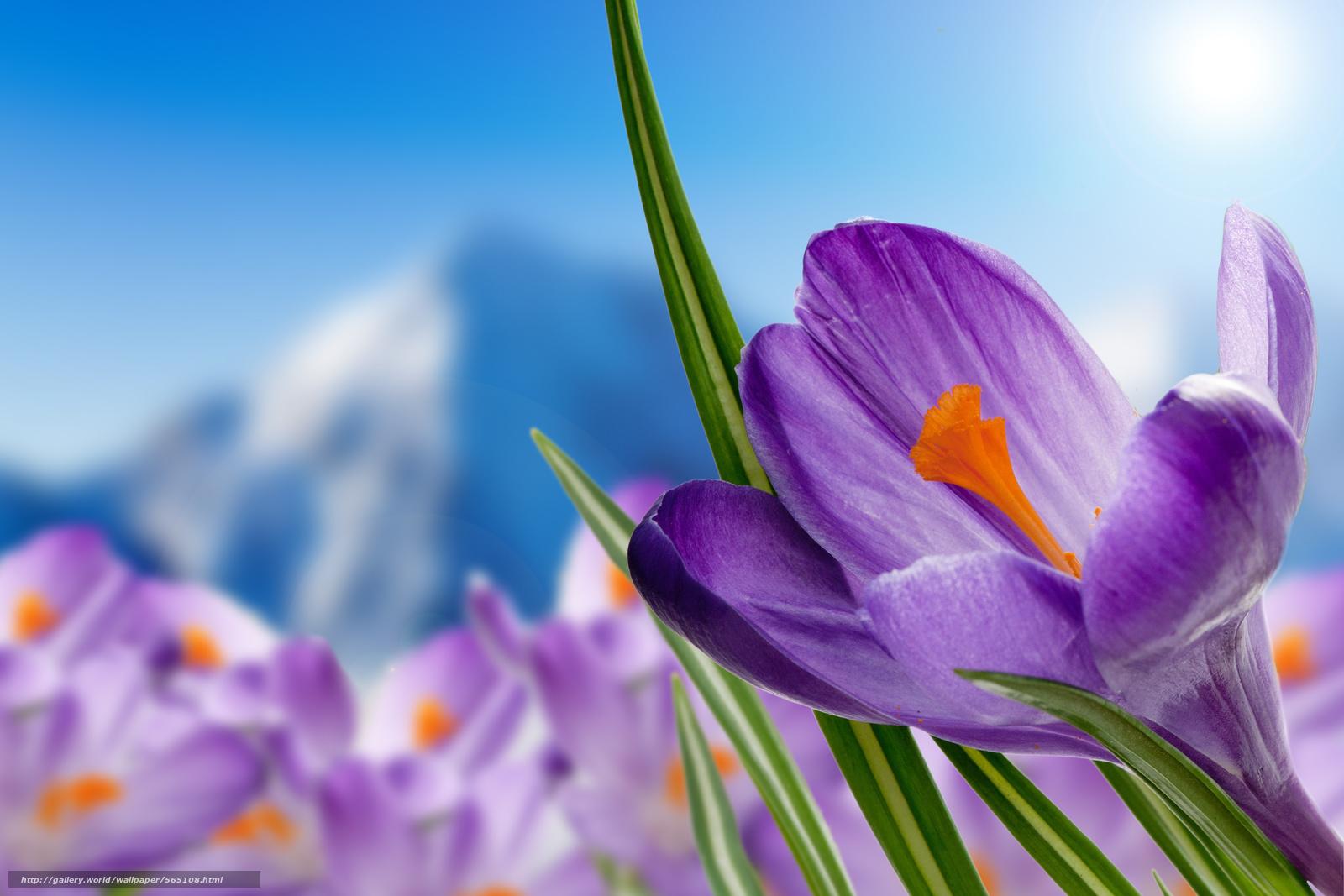 Весна цветы и картинки