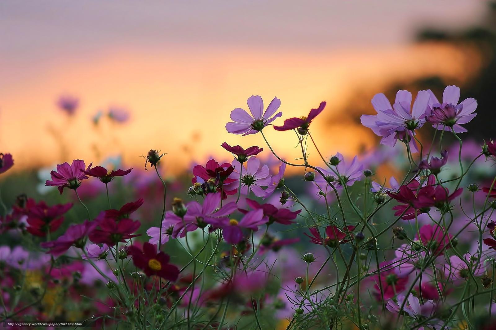 Фото природа высокого качества цветы 54