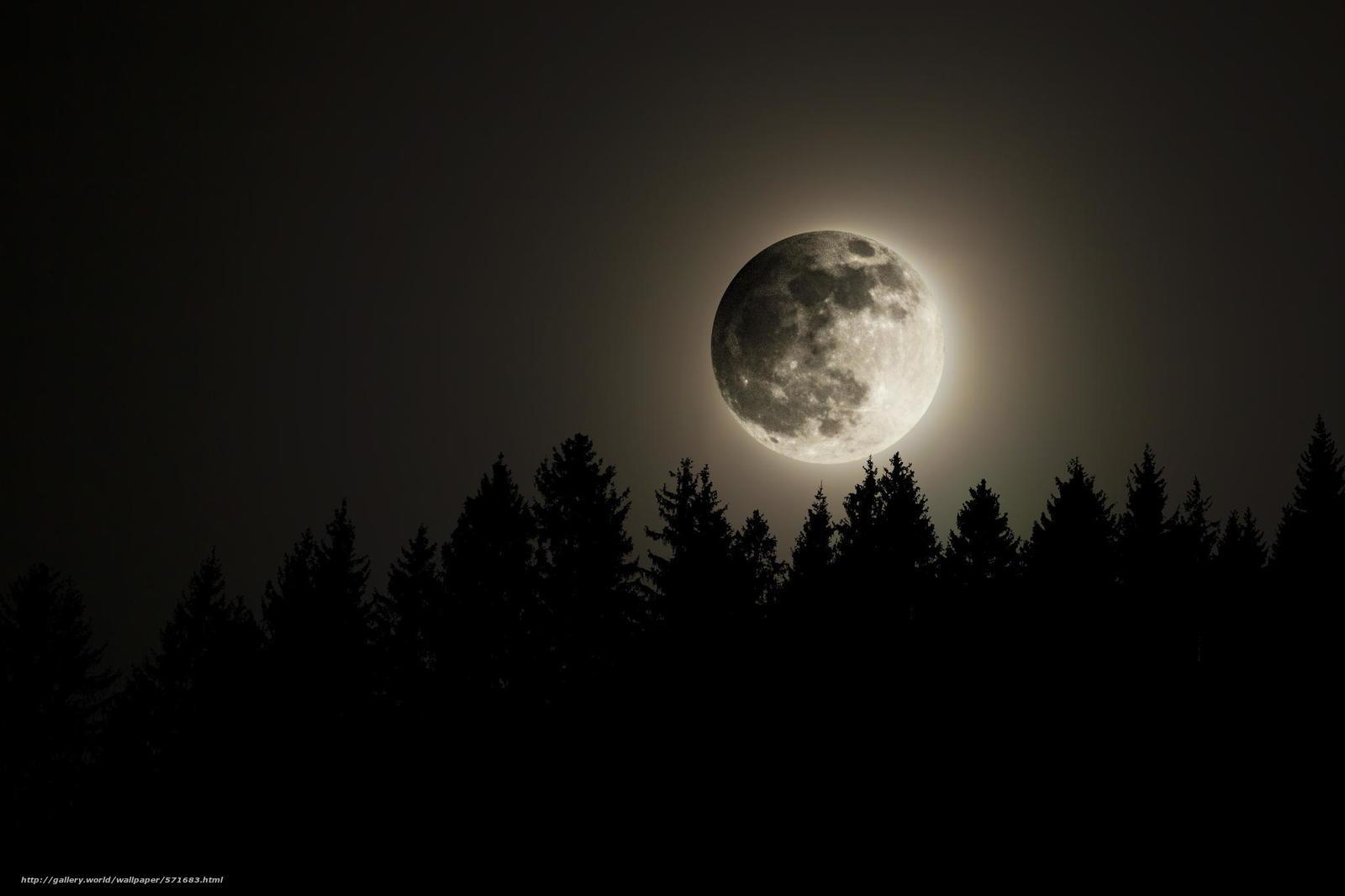 Cielo, Bosque, Noche, Luna, Luna Llena