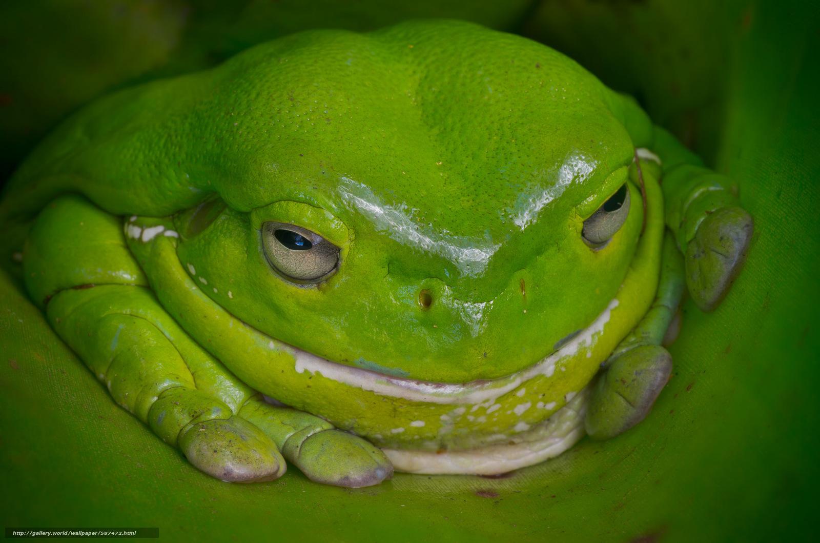 Картинки зеленой жабы