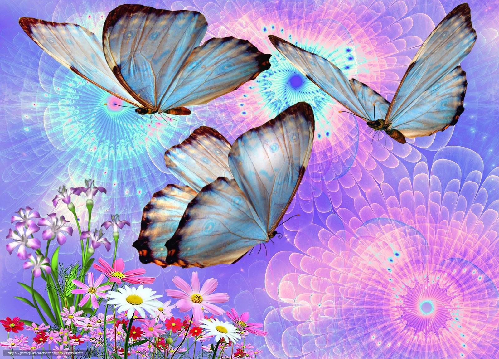 Полет бабочки на цветение цветы Стоковый видеоролик