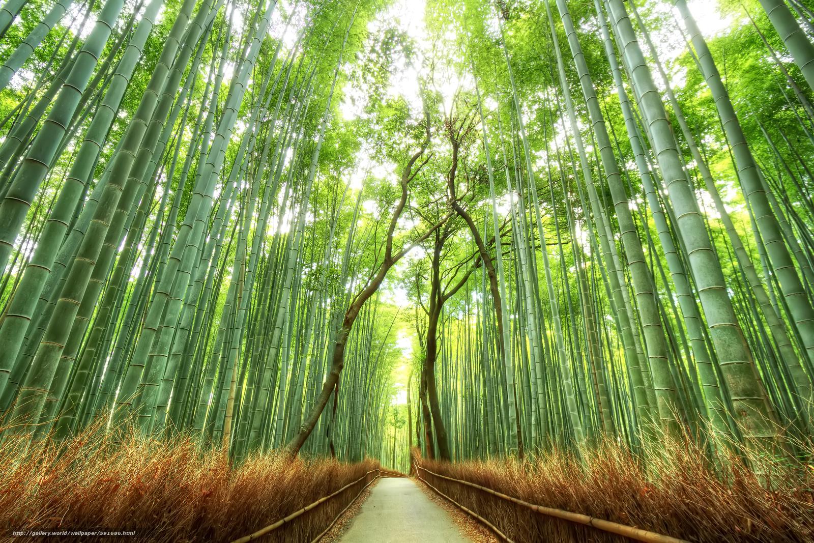 in a bamboo grove creative re write
