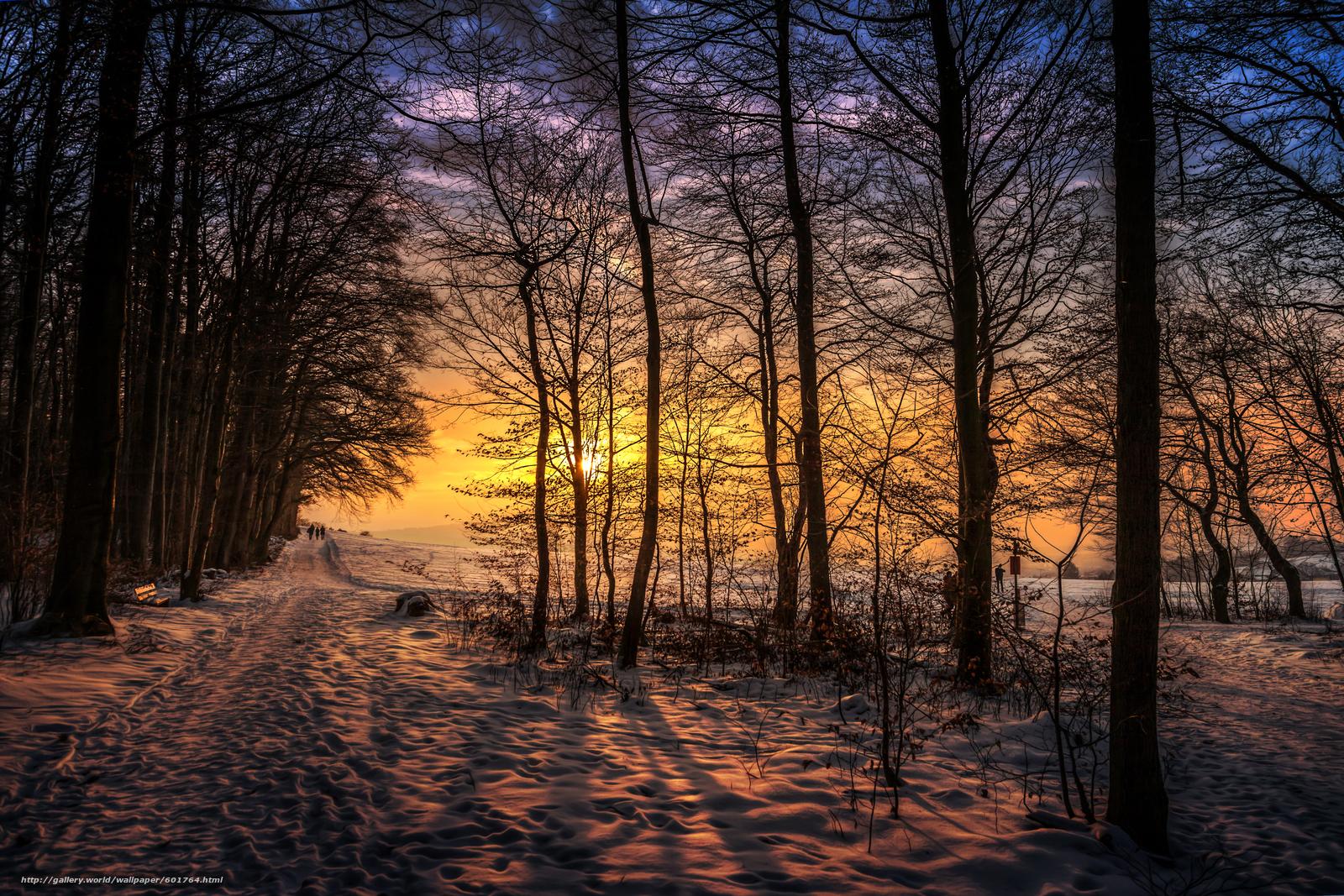 зима, закат, лес, деревья, дорога, солнце, снег, sunset walk, пейзаж