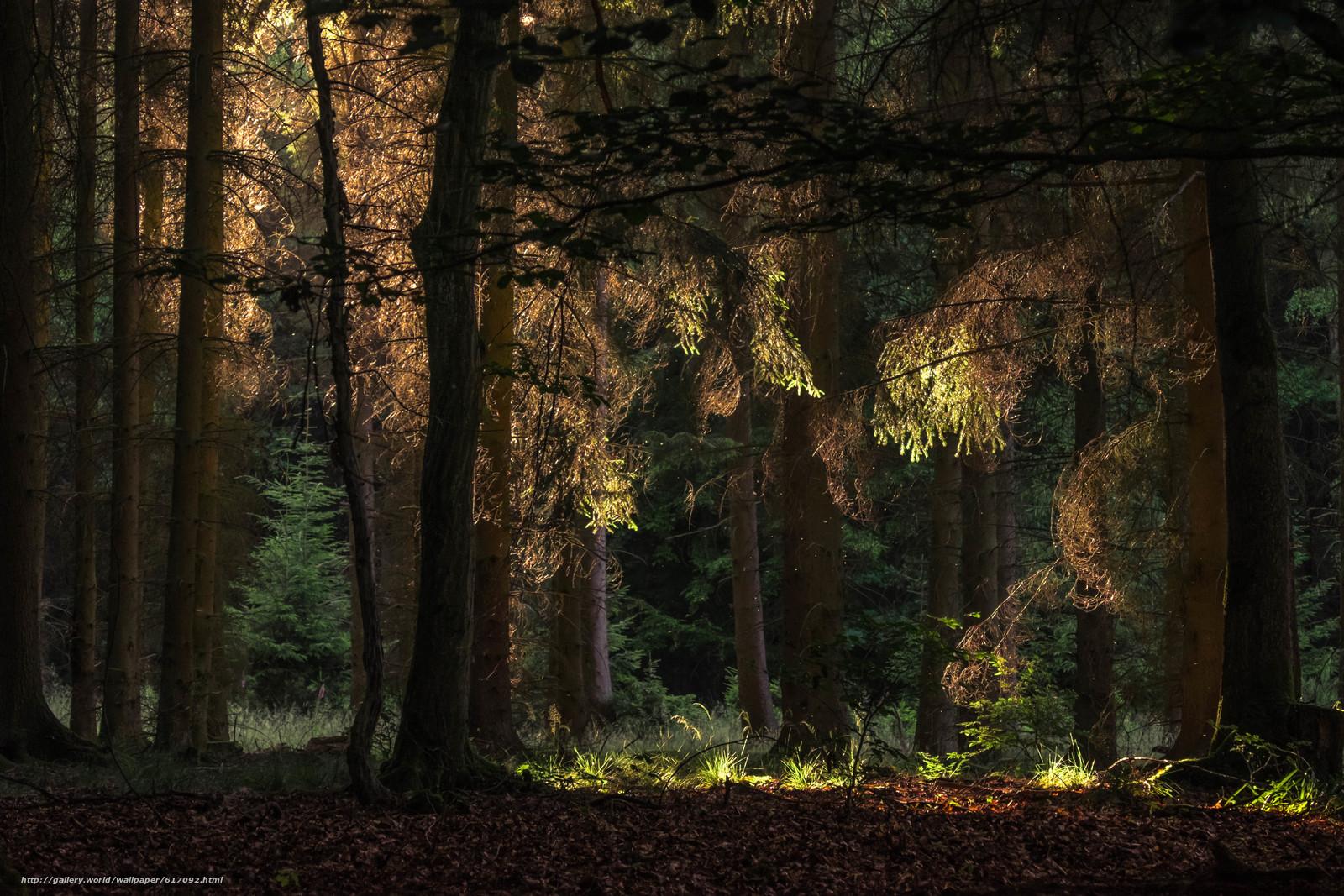 Лес, деревья, природа, листья