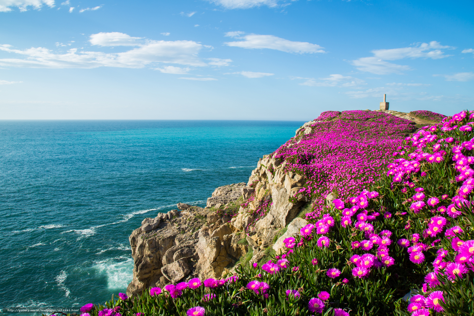 Suances, Cantabria, Spain, Bay of Biscay, Suances, Cantabria, Spain, Bay of Biscay, bay, ocean, Rocks, Flowers, coast