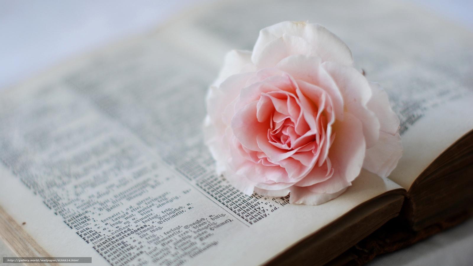 Фото мелких нежных цветов