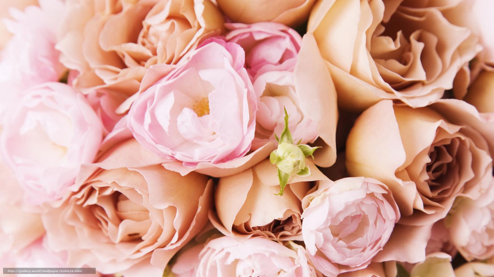 бежевые розы обои на рабочий стол № 51771  скачать