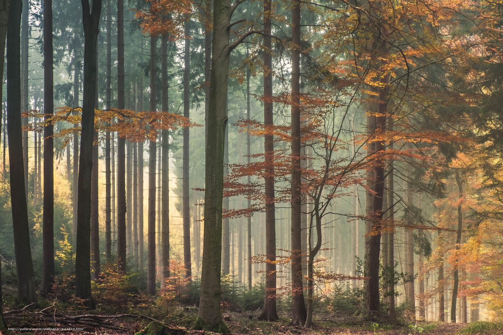 Лес, природа, деревья, кусты, свет, осень, листья