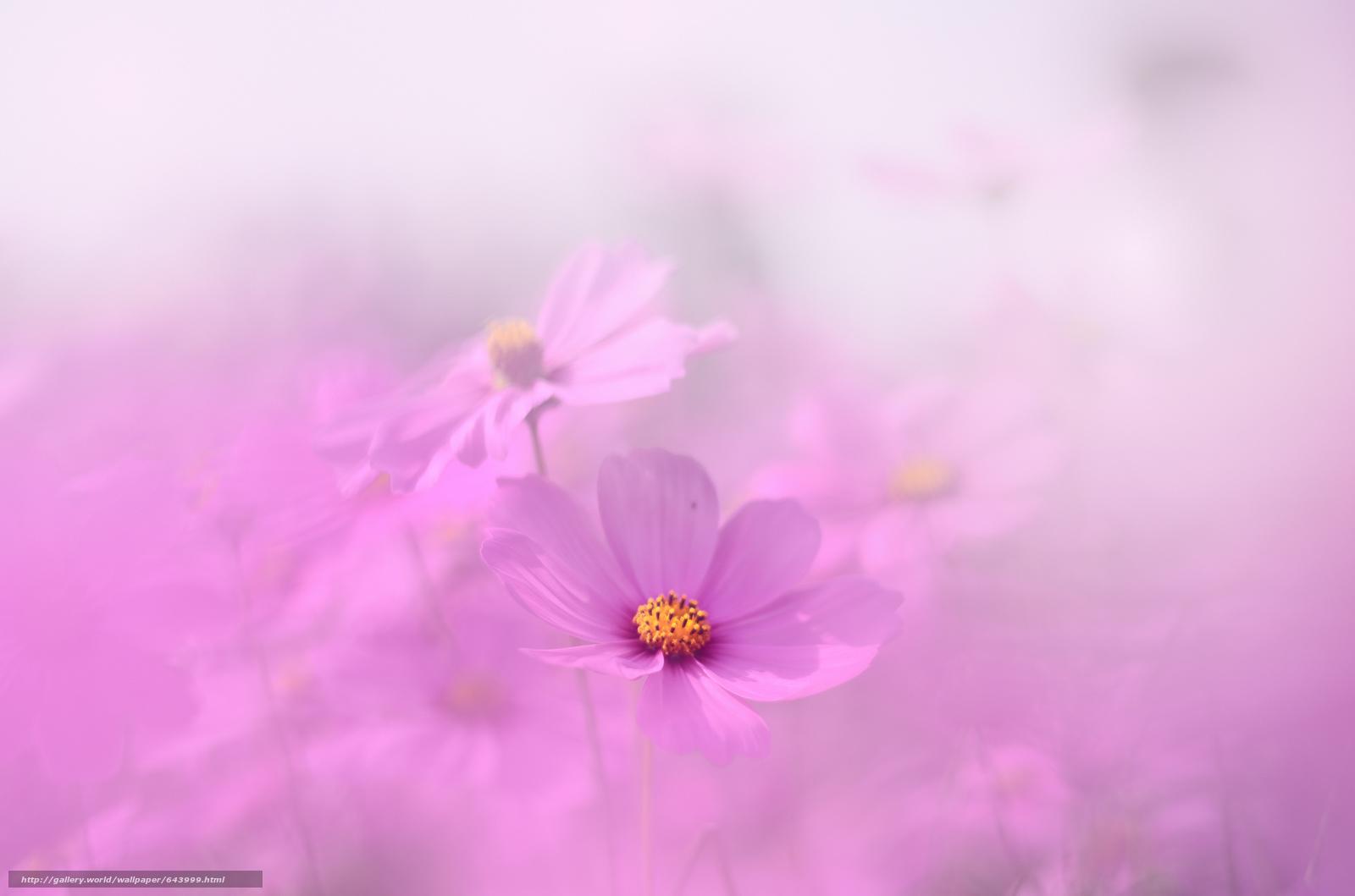 Фото цветы в дымке