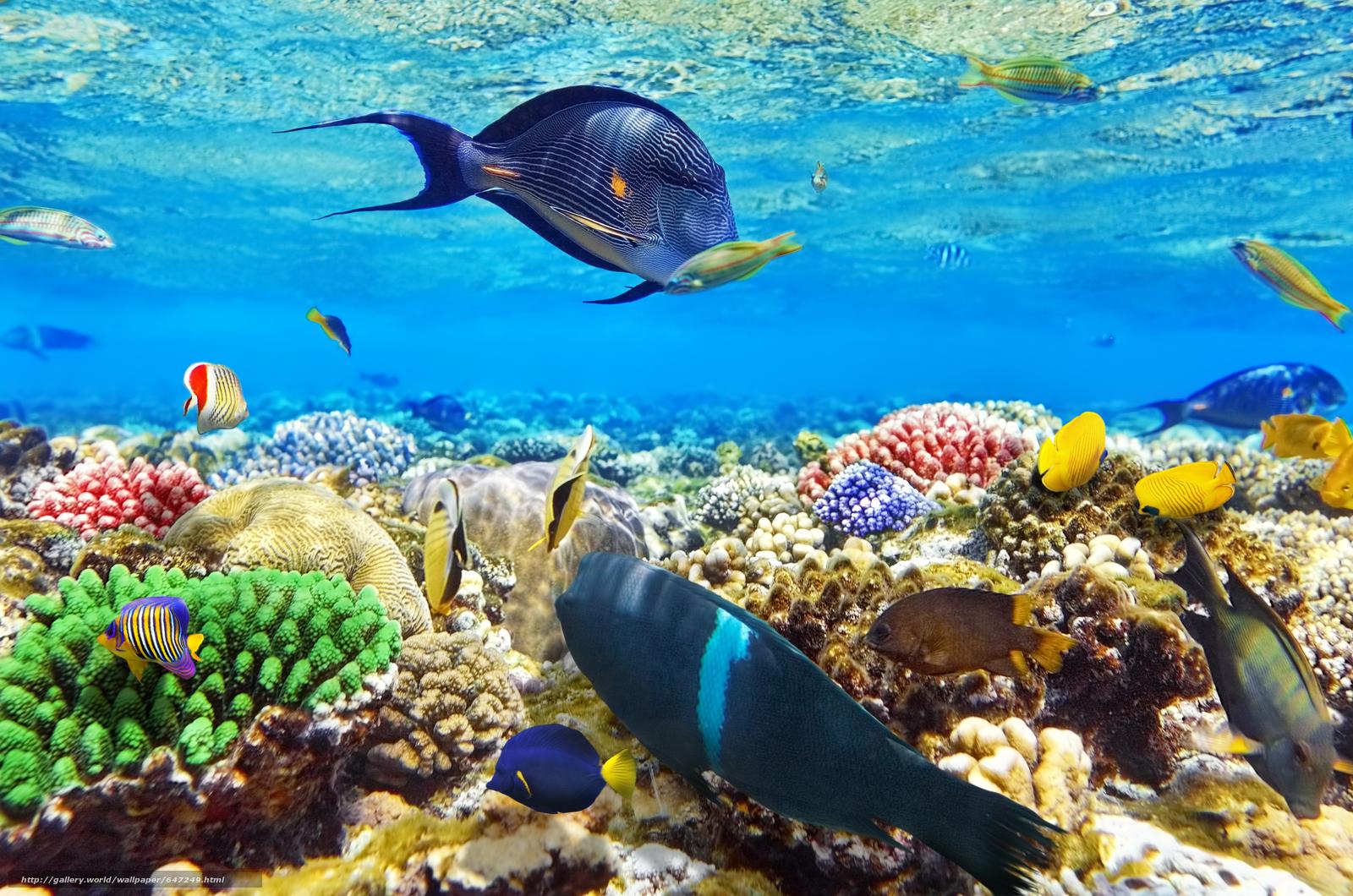 красное море рыбалка и рыбы в нем