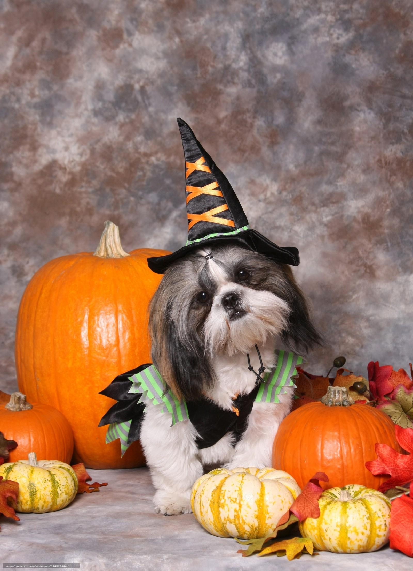 Cute animals in halloween costumes