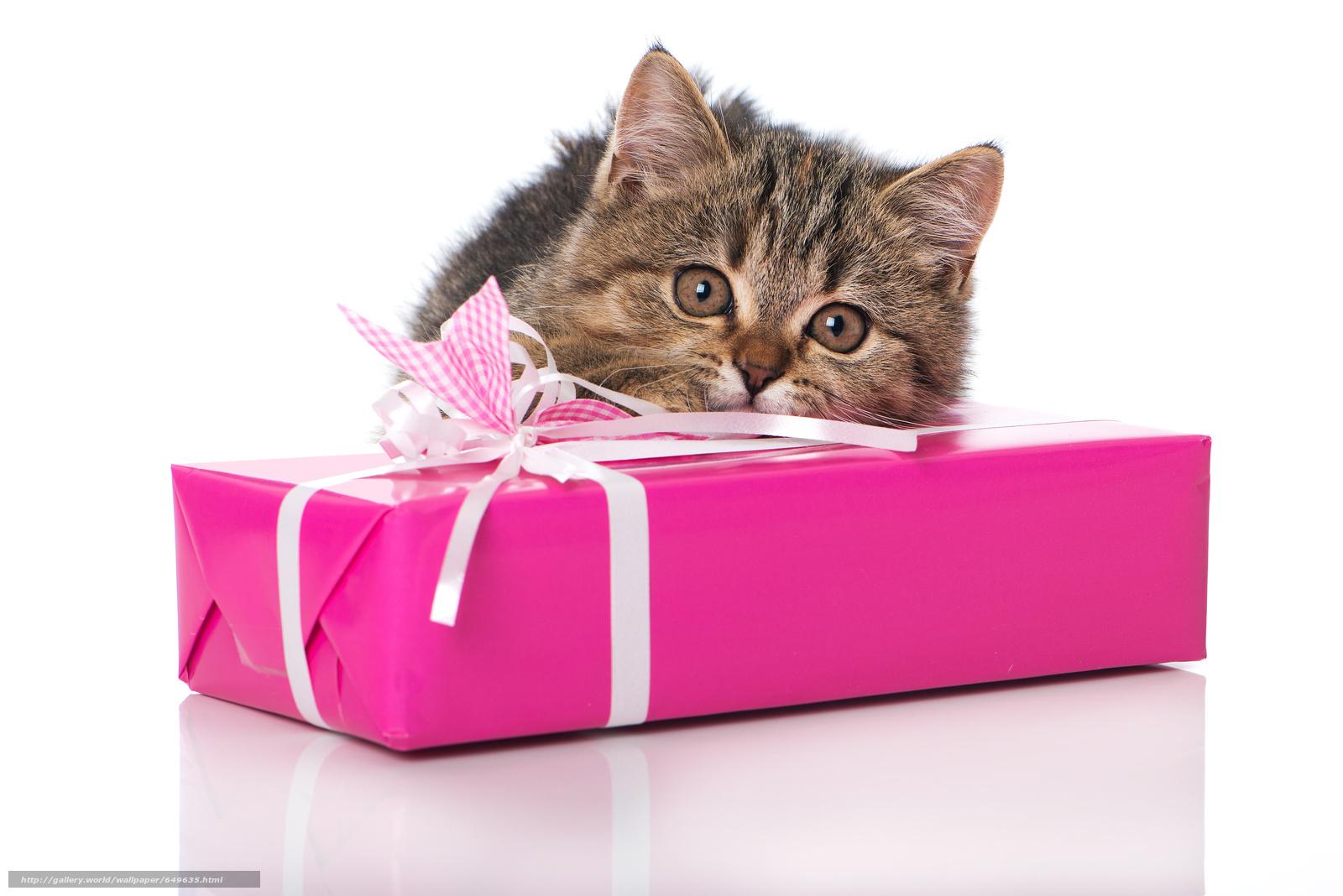 Подарки для кошек