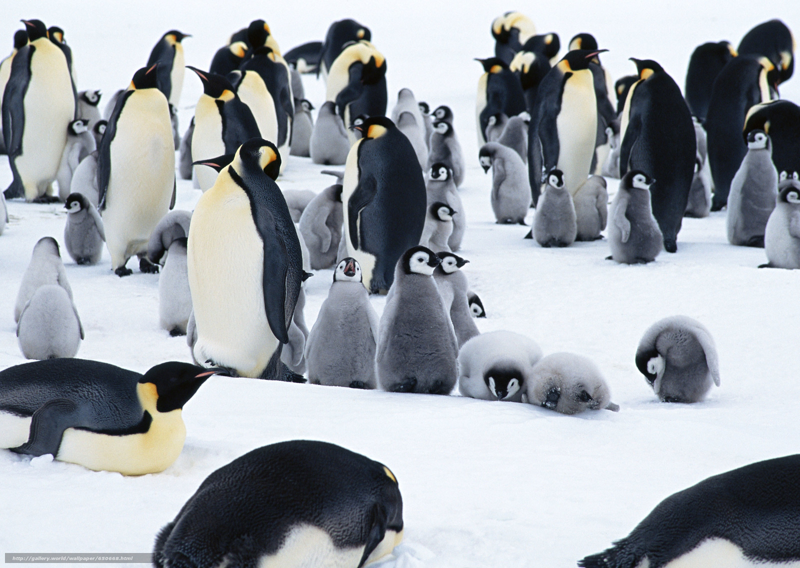 Rainforest Animals List With Pictures, Facts & Information Pictures of animals found in antarctica