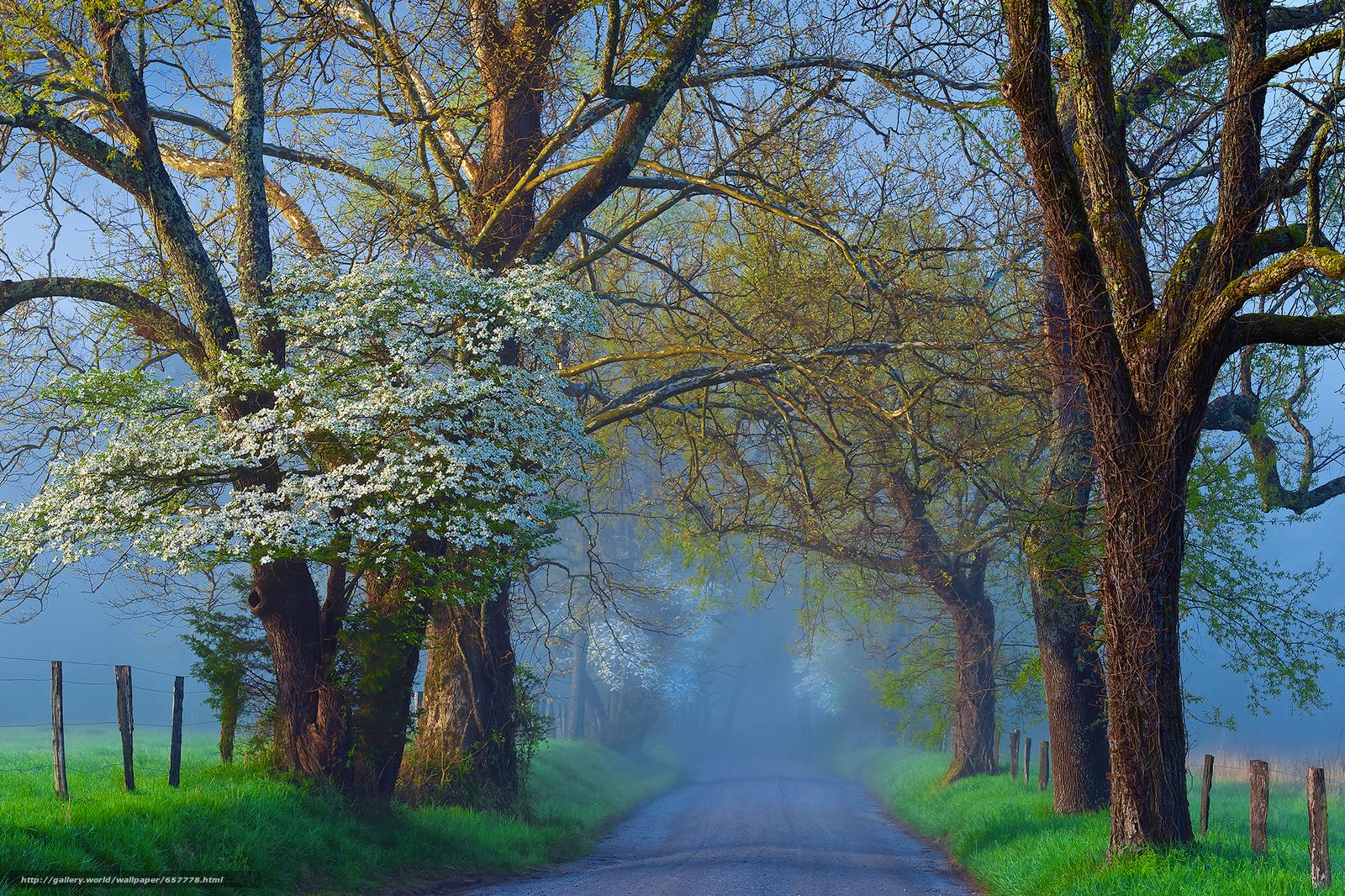 road, field, trees, fog, landscape