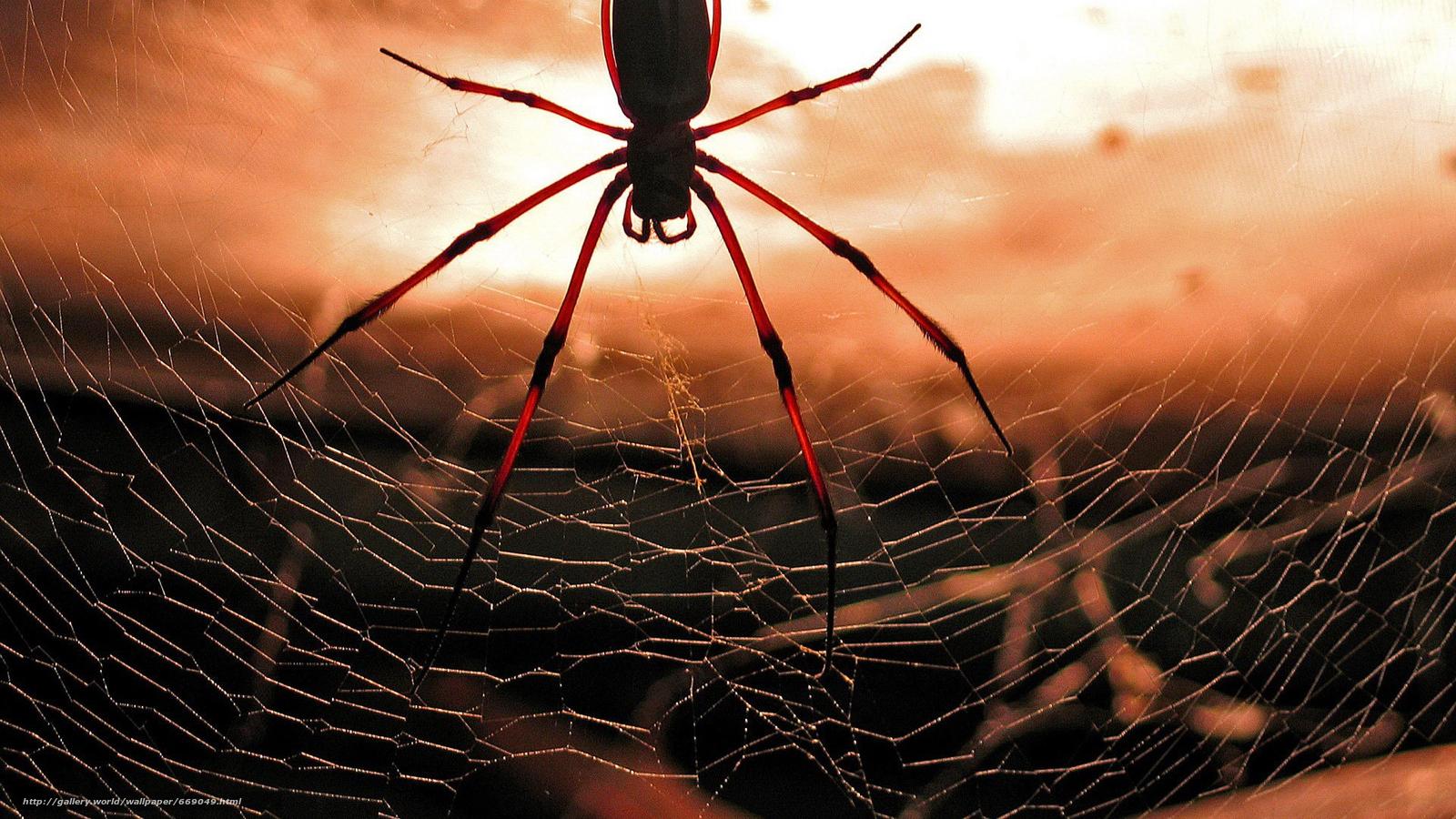 обои на рабочий стол бесплатные человек паук