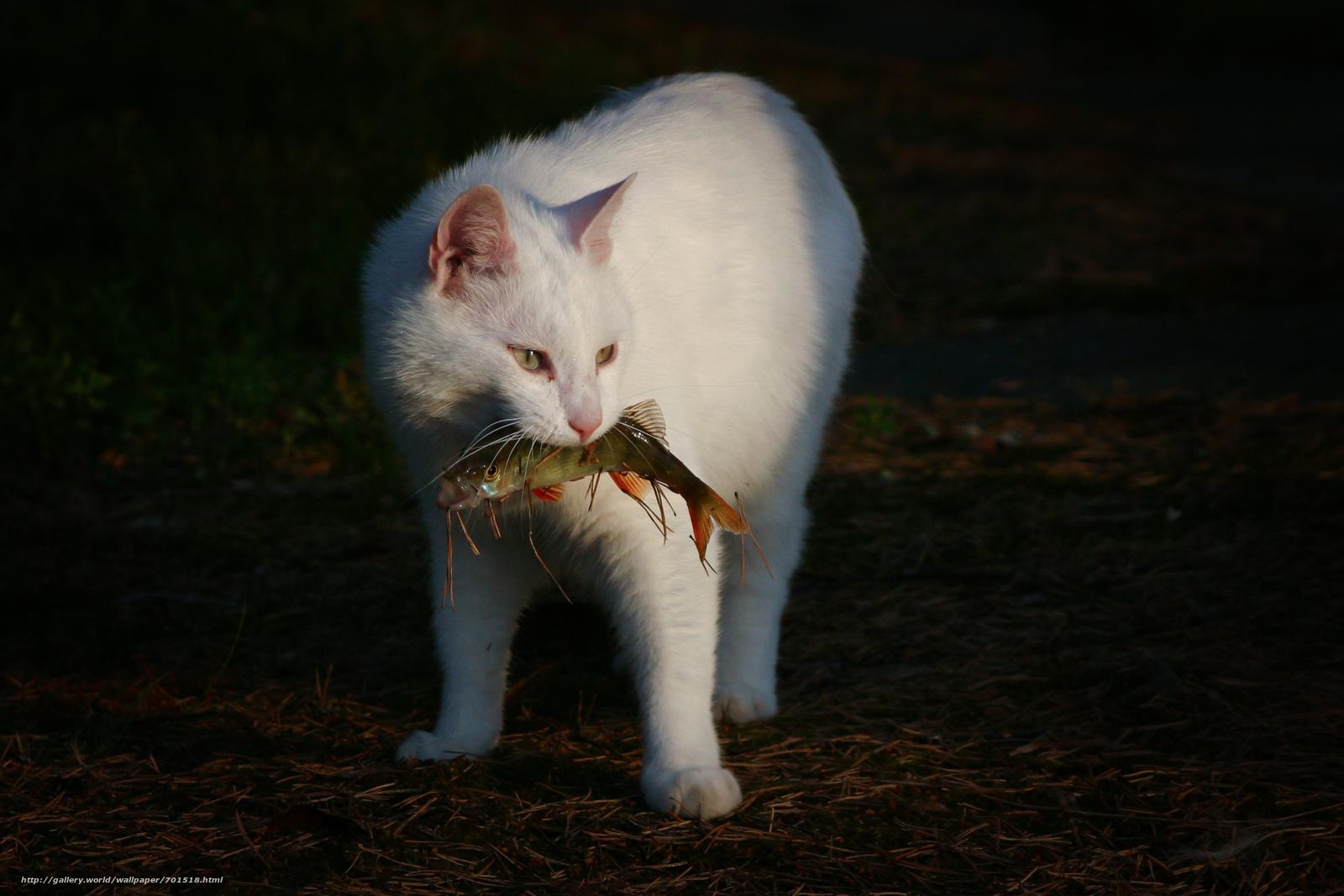 Какие кошки ловят мышей