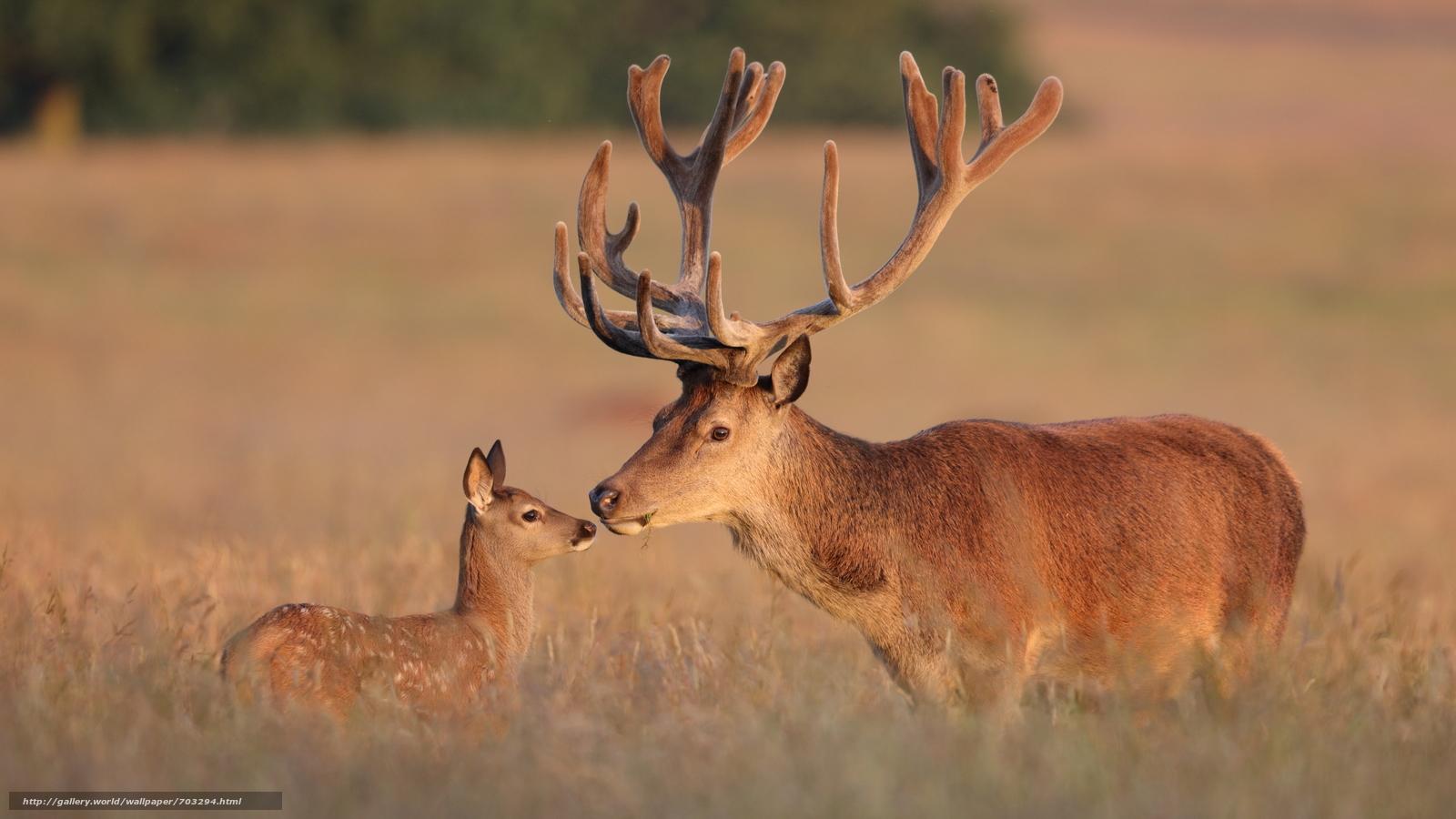 Dating sites red deer