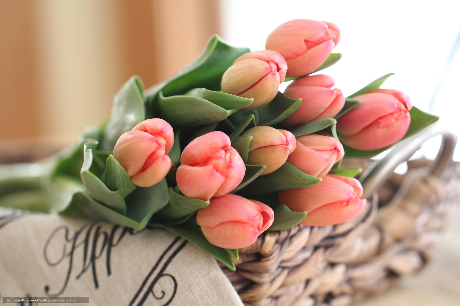 Красивые цветы тюльпаны и картинки