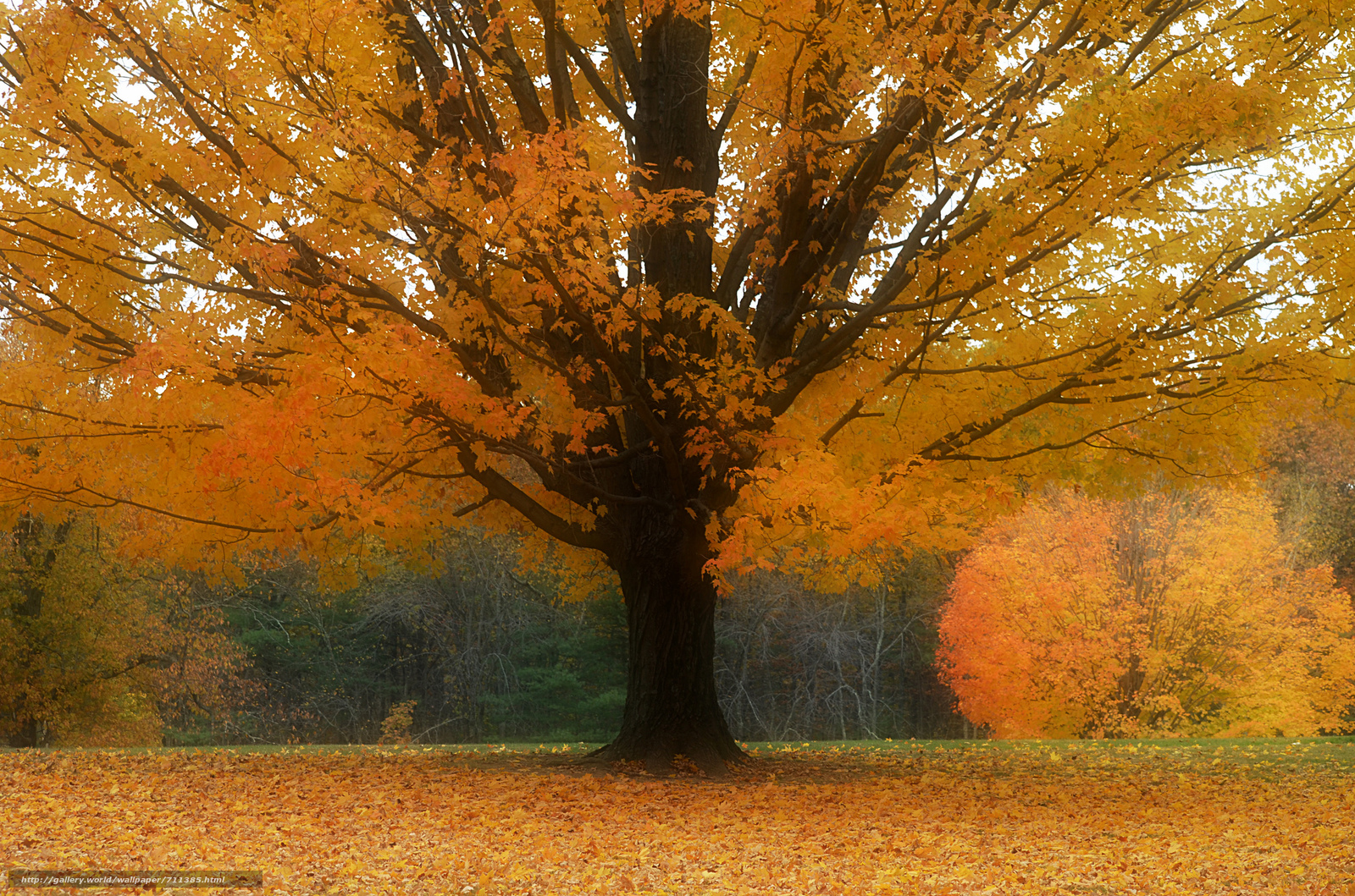commentary on field of autumn Best wishes for the autumn equinox from everyone at the wild hunt.