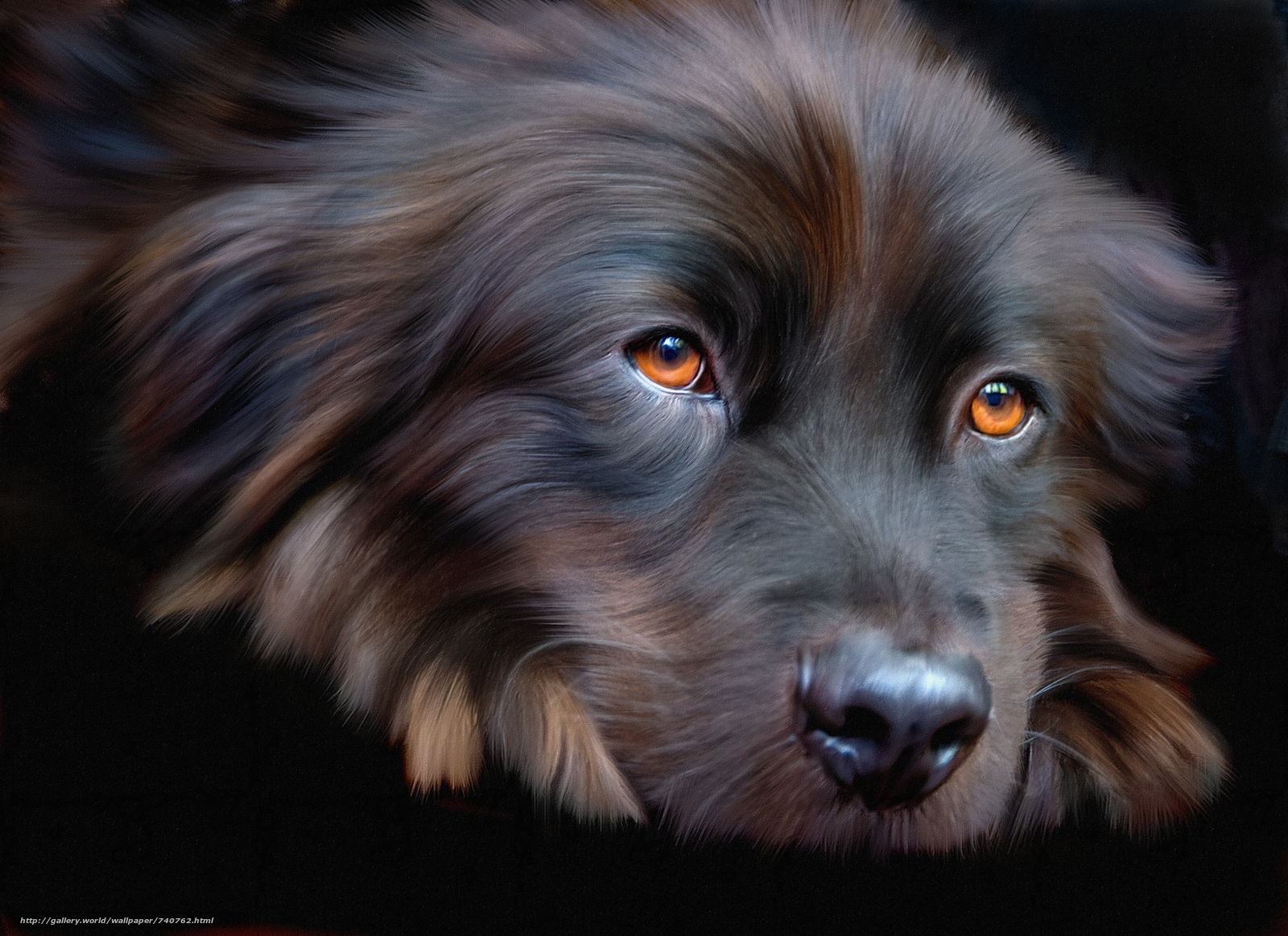 dog, muzzle, sight